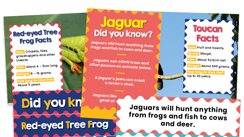 Ks1 Science Rainforest Animals Facts Posters For Classroom Displays And Inspiration Plazoom Do you like to stay at home with your. ks1 science rainforest animals facts