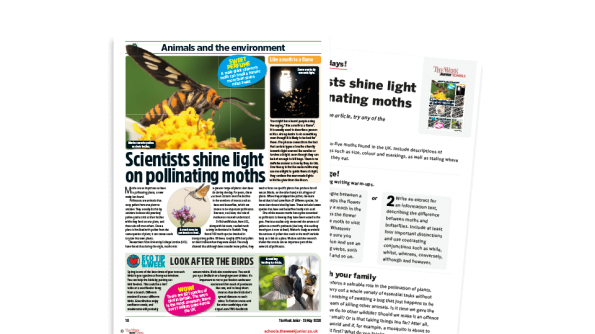 Image of Topical Tuesdays from The Week Junior - Marvellous moths