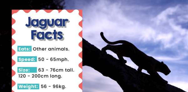 Preview image of KS1 Rainforest Animals Poster Pack: Display and Writing Inspiration